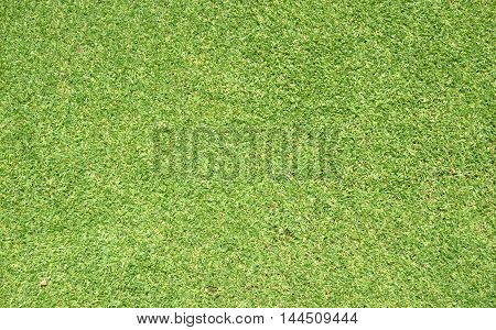 The Grass Lawn Background
