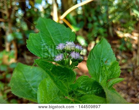 flower of indonesia, center java, greenty in jungle