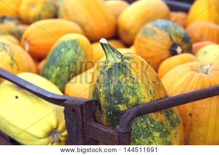 A harvest of pumpkins before Halloween. Soft focus