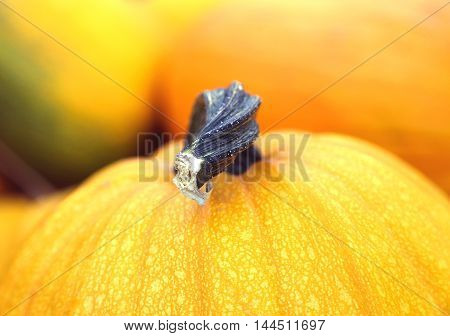 Close-up ripe yellow pumpkin. Halloween background. Soft focus