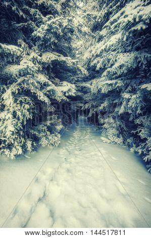 Vintage Footpath In Snowbound Forest