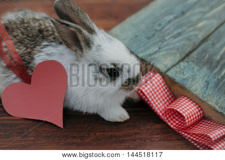 Cute little bunny rabbit with decorative heart of pink paper with ribbon and bow on wooden background