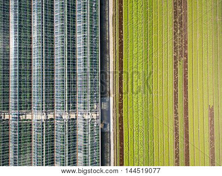 Aerial Agricultural View Of Lettuce Production Field And Greenhouse