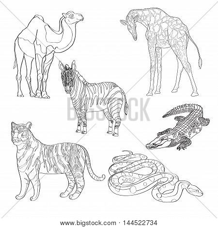 vector illustration giraffe, zebra, crocodile, camel, snake and tiger black line