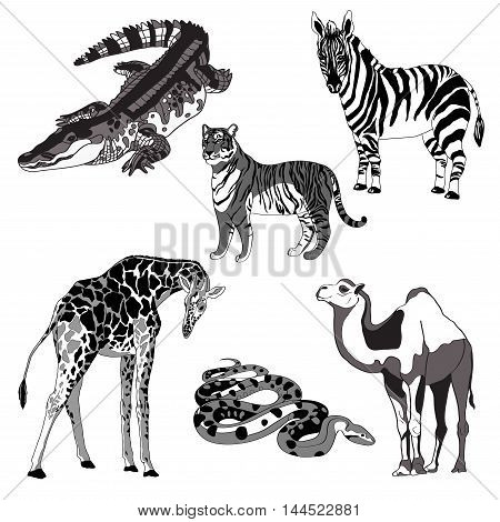 vector illustration giraffe, zebra, crocodile, camel, snake and tiger. black and white and gray