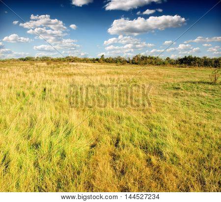 A field of tall green and golden grass