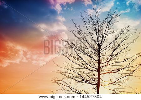 Black silhouette of a tree against beautiful sunset. Lovely landscape of nature.