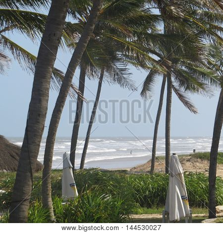 Beach landscape with palm trees and waves in the background