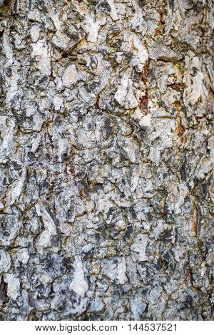 Close up of Tree bark Texture Background