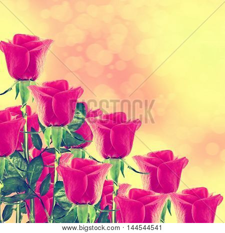 The buds of flowers roses. Holiday card. Floral background