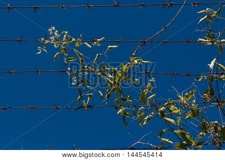 Barbed wire and blue sky with clouds.