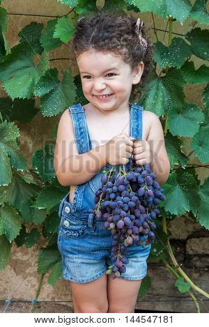 Cute smiling baby girl holds bunch of ripe grapes outdoors picking harvest of grapes
