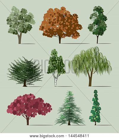 Hand drawn Trees sketch set, vintage illustration.