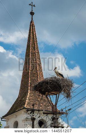 White stork nest in Saxon village Sibiel in Romania