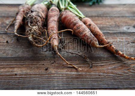 New harvest fresh organic carrots