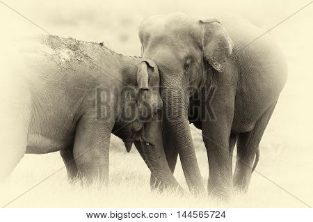 Elephants In National Park. Vintage Effect