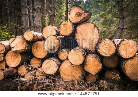 Wooden logs or trunks of trees cut and stacked on the ground in forest