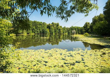Pond with water lilies during sunny weather