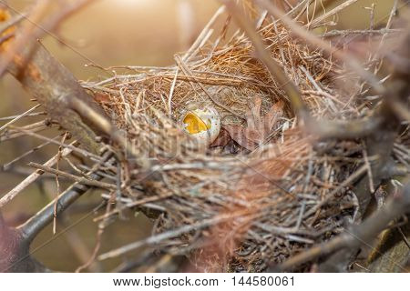 nest made of straw with broken egg