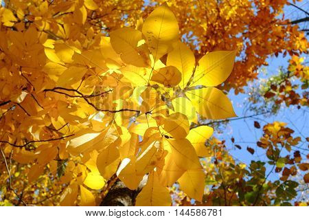 Autumn leaves with blue sky background