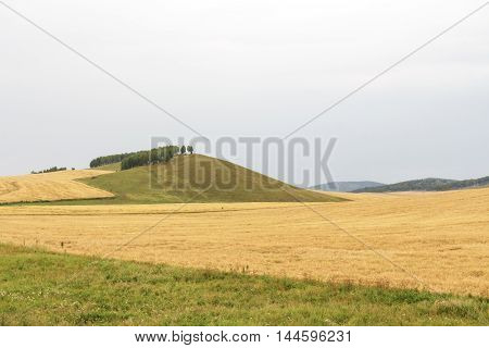 field hilly landscape of wheat overcast sky summer