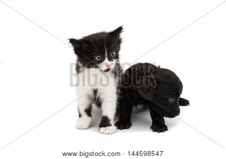 small beauty Kitten on a white background