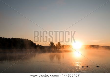 Sunrise mist on the Yellowstone River with Canadian Geese flying overhead