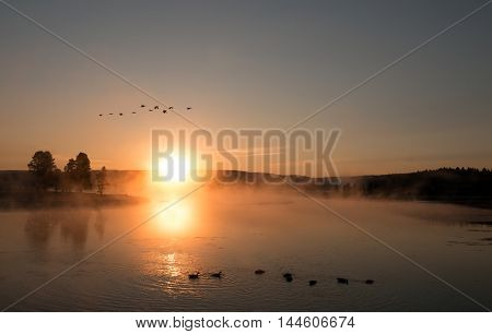 Sunrise mist on the Yellowstone River with Canadian Geese flying over Geese and Swans in the Hayden Valley of Yellowstone National Park in Wyoming US of A