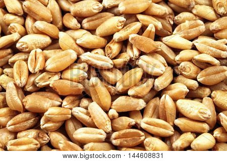 A super macro image of wheat kernels