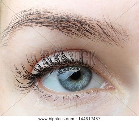 Female eye with long eyelashes without makeup close up
