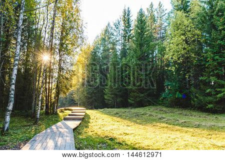 Forest In Sunny Weather