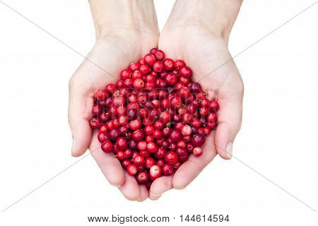 Woman hands holding fresh red lingonberries isolated on white background