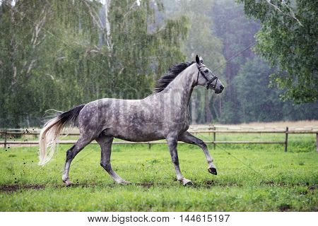 one beautiful horse running outdoors in summer