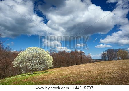 Beautiful spring scene on the mountain Goc in Serbia.