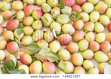 Ripe sweet yellow green red pears background