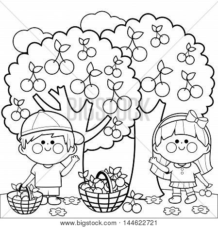 Vector black and white Illustration of two children, a boy and a girl picking cherries under cherry trees. Coloring book page.