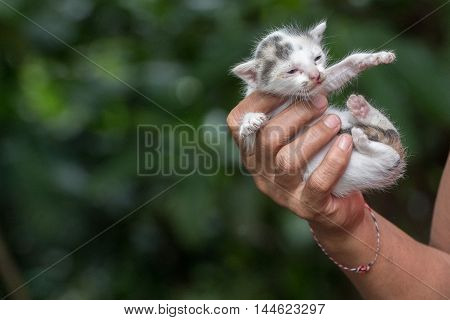 Hand Holding Newborn Cat Close Up Detail