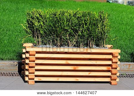 Wooden base with small-leaved ornamental shrubs to decorate squares