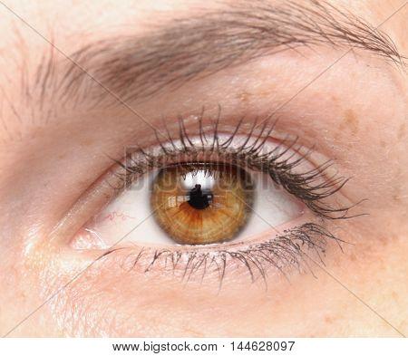 close up shot of a woman eye