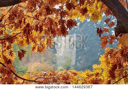 Autumn golden leaves in frame outdoor with blurred background