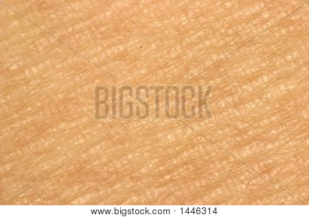 Skin Close-Up