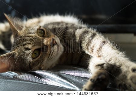 quietly lying cat in thee light of