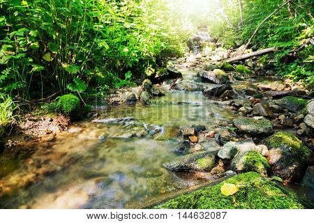 Small mountain stream in a dense forest