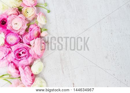 Pink and white ranunculus flowers buds border on aged white wooden desktop with copy space