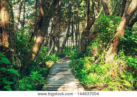 Rain forest in Vancouver island, British Columbia, Canada