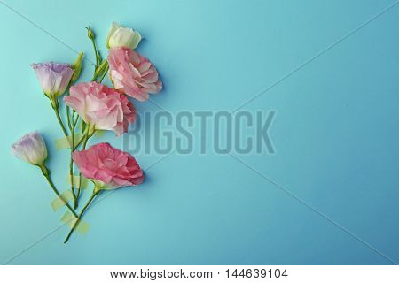 Beautiful composition of pink eustoma flowers on turquoise  background