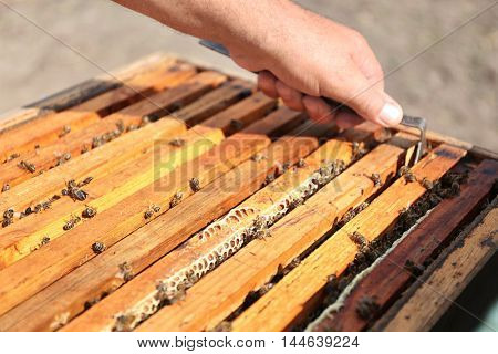 Man hand getting out honeycomb from beehive