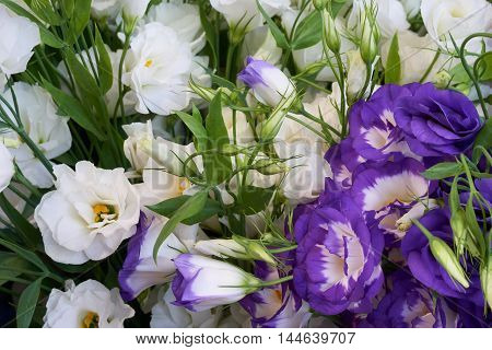 Bunch of white and violet flowers as floral background