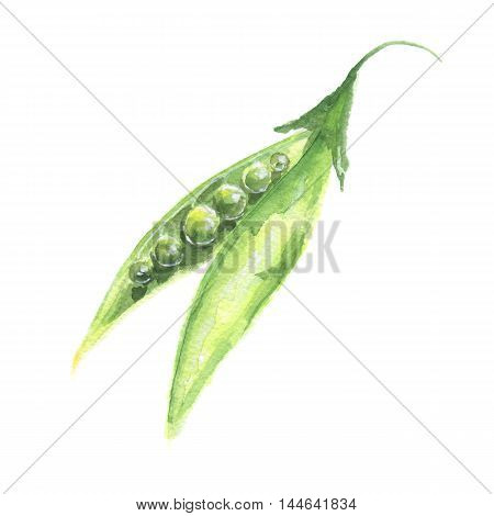 Isolated watercolor peas on white background. Healthy and tasty vegetable with vitamins.