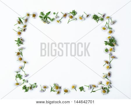 Frame made of chamomile flowers isolated on white